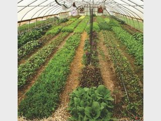 greens_hoophouse_320x240