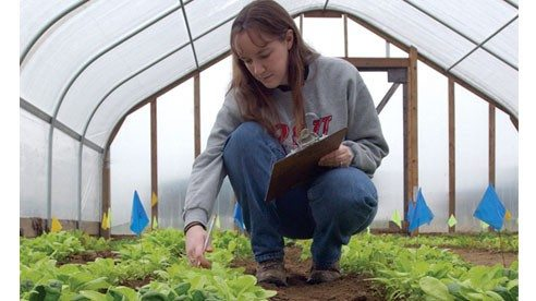 Among many other projects, OARDC is exploring how high tunnels could help Ohio farmers increase the availability of local produce.