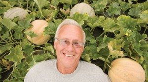 Through years of farming, Dave Weilnau has learned the ins and outs of a perfect melon.