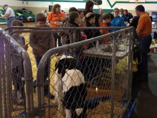 Students learning about agriculture at Seneca County Farm Bureau's 'Our Ohio... Your Backyard' program.
