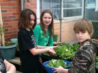 Students harvest lettuce as part of the Farm-To-School project