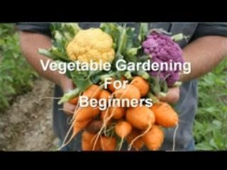 vegetable_gardening_beginner_screenshot_320x240