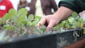 grow_and_know_3-36e35e4bfc422be4554a2a40e594c3d5
