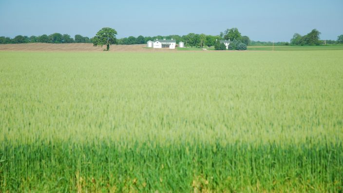 field, oats, wheat, green, farm house, blue sky, Clark County, Michaels Farm