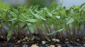 vest_seedlings-02e8c0f30d30c45165b29b444edcd90e