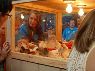 Visitors to the Ag & Hort Building were able to do and see many fun things, including chicks hatching.