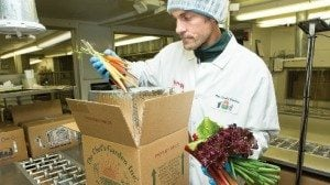 A Chef's Garden team member pack tender, fresh rhubarb for a restaurant's order.