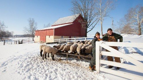 Susan and Bill Shultz have each attended Ohio State University's Lamb 509 class, which gives farmers hands-on experience to help them raise animals that will better meet their customers' demands.