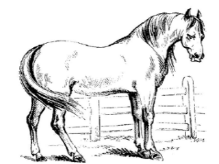 BSF_horse