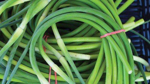 Garlic-6fbc06119d601186e8570a23416ae5cf