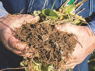 Many farmers are exploring cover crops as  a way  to build soil and reduce nutrient runoff.