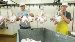 Workers trim chickens on the line and chill them on beds of ice to keep them fresh.