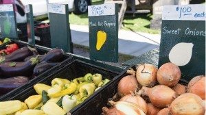 Onion sets greet customers for fall planting.
