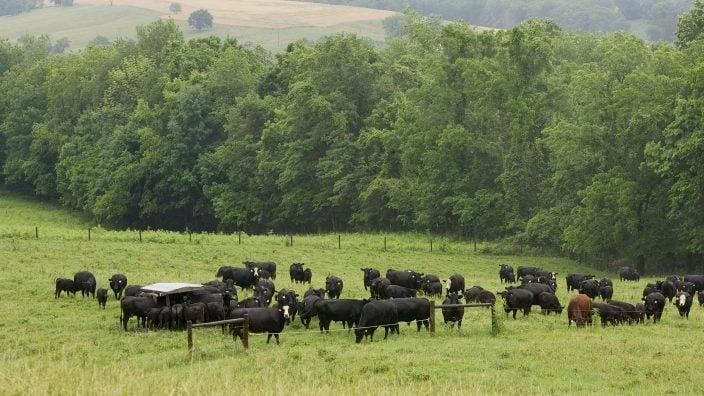 Guernsey County Ohio Farm Bureau