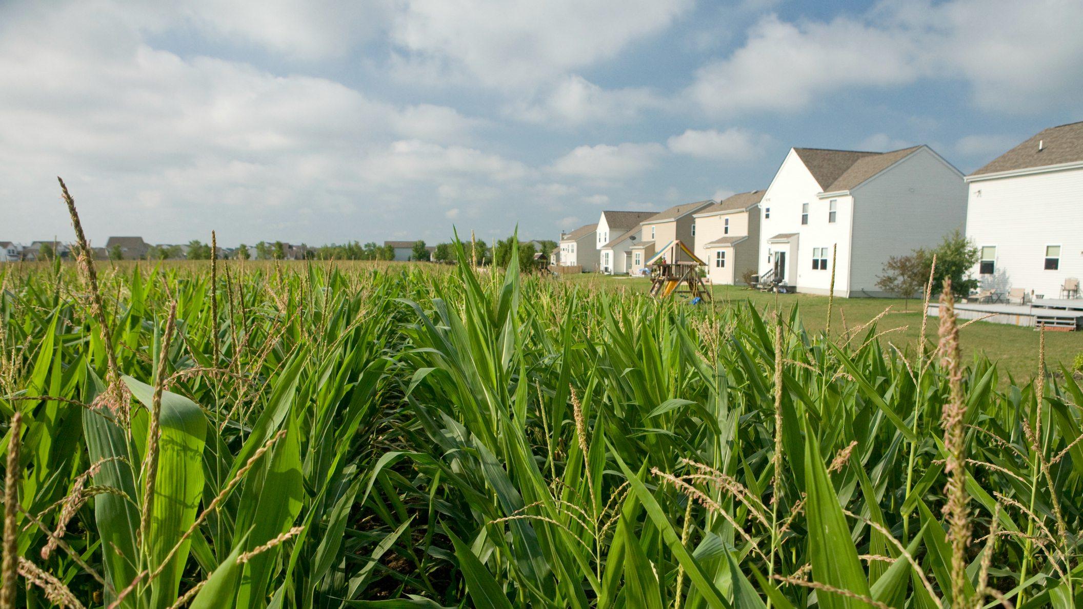 RuralUrbanInterface20120727_4083