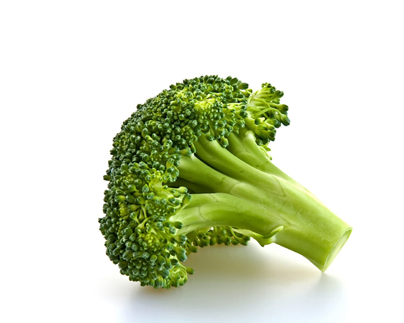 Green broccoli isolated on a white background.