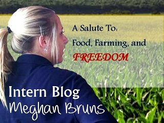 Intern_Blog4