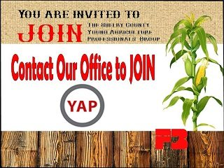 YAP_website
