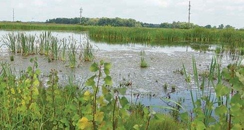 A wetlands feasibility study and equipment and support for water quality improvement techniques at Lake Choctaw are bringing together farmers as well as a suburban community.