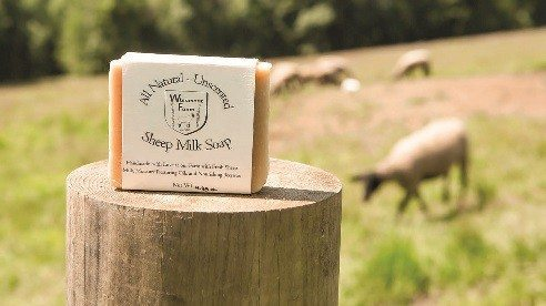 Whinmont Farm's sheep are raised for meat and 4-H projects and are sometimes milked to make sheep milk soap sold online and in a few Ohio stores.