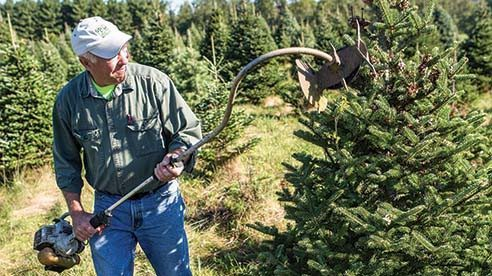 Shearing is very important in Christmas tree production. Doing so controls the shape and density of foliage, ensuring the best looking Christmas trees for customers.
