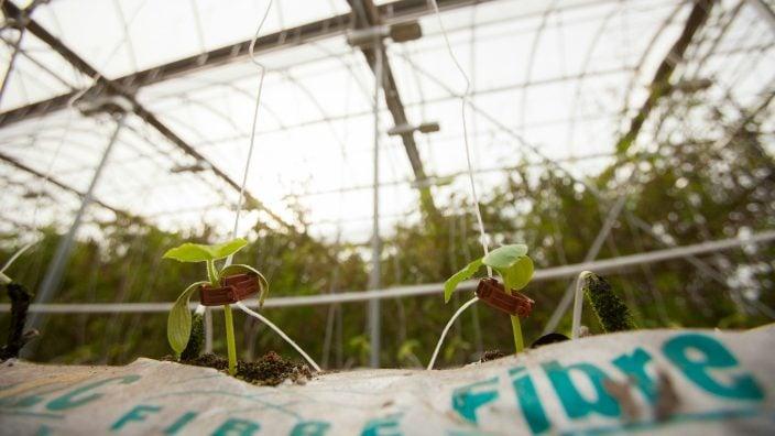 verticalfarming_hydroponics