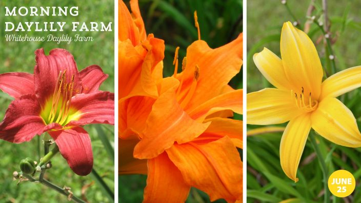 Day Lily Event - website post