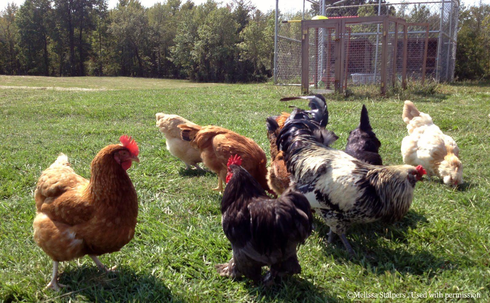 Backyard Chickens Seminar - Ohio Farm Bureau