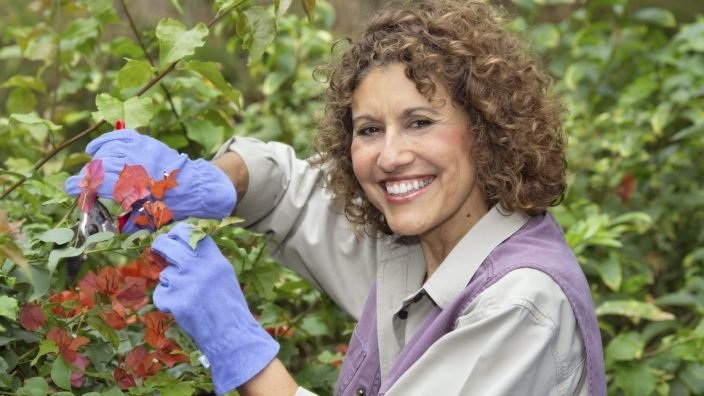 A mature female gardener prunes a bougainvillea.