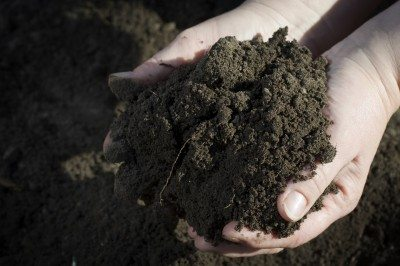 garden-soil