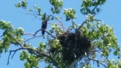 canoe flloat eagle