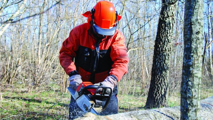 Action when a lumberjack is cutting a big tree trunk with a chainsaw