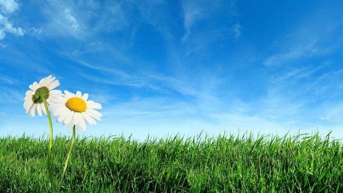istock_photo_green_grass_daisies_3033