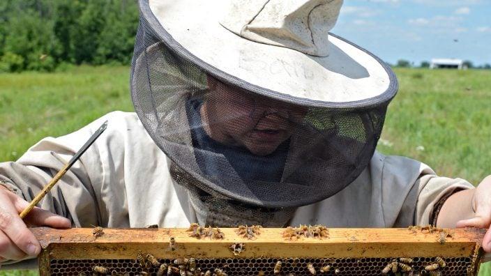 woman-beekeeper