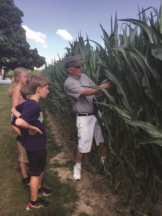 dietsch-cornfield