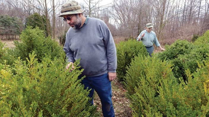 OFB_Poruben_5920: Richard Poruban, left, and his father Floyd Poruban look  over the Green Gem boxwood shrubs at the Poruban Nursery in Avon, Ohio. (Photograph by Peggy Turbett,  Monday, March 27, 2017, for Ohio Farm Bureau)