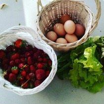 petro-farm_market
