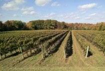 petro-vineyards