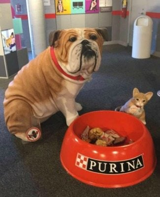 purinafarms