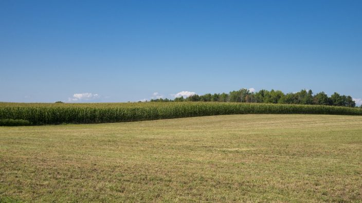 ron-burns-corn-field