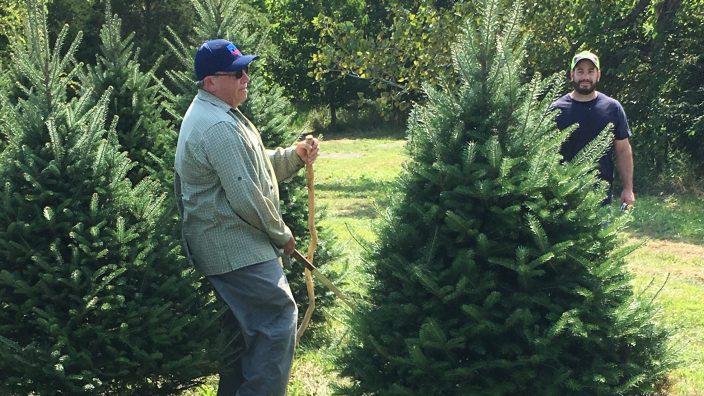 christmas-tree-trimming