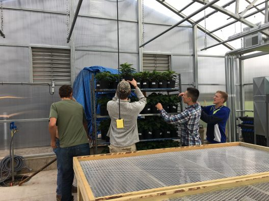 Members of the Greenhouse Management Class helping to unload the poinsettias after delivery.