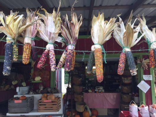 kristen-corn