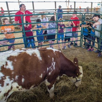 Students in the county also got an up-close look at the cows themselves.