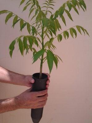 seedlings-281396_640