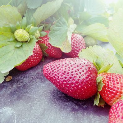 florida-strawberries