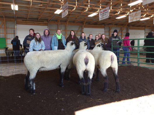 General Livestock team