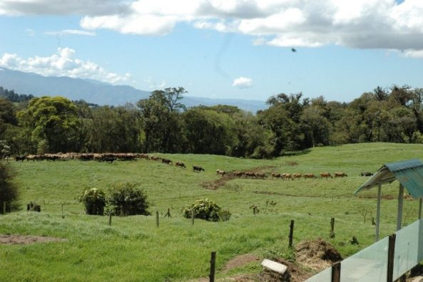 Mountain side Dairy Farm.