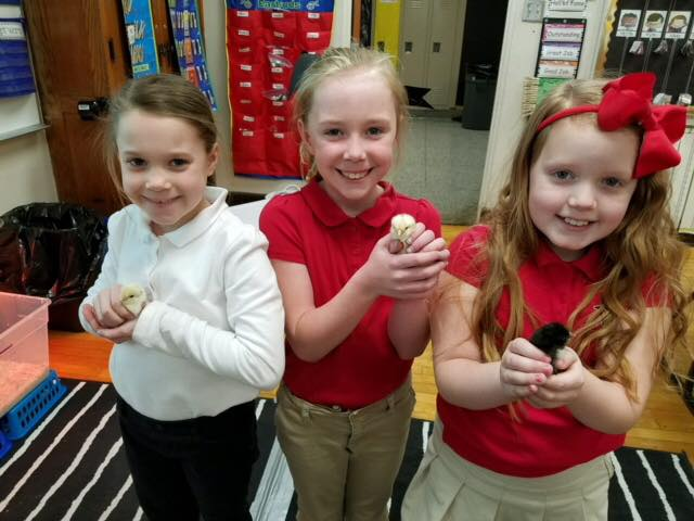 Our 'Chicken Whisperers' at Wells Academy who were a huge help to the teachers (left to right)- Alivia Casinelli, Lucy Jo Saccoccia, Kylie David