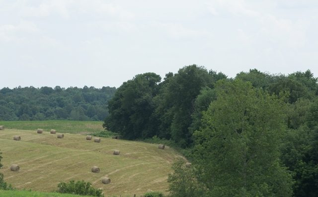 Hogue Dairy Farm June 2013